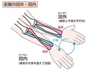 手関節の動き